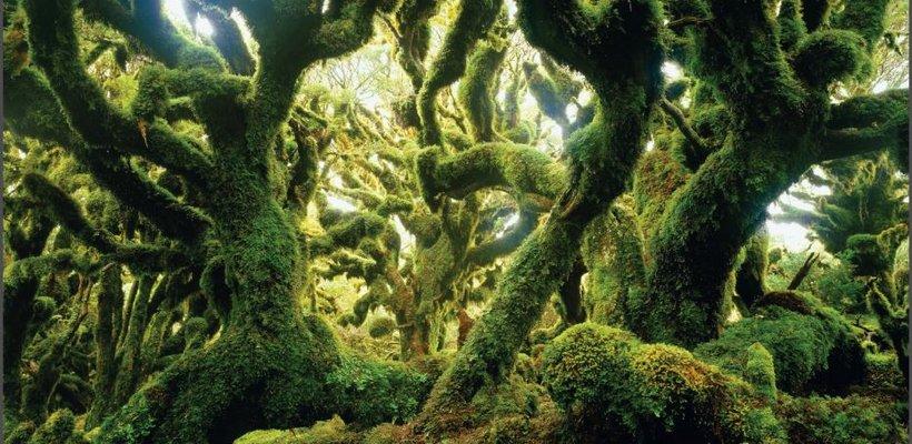 arbre_820