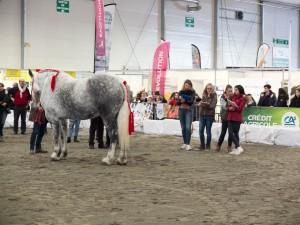 FET Concours jeunes pointeurs equins