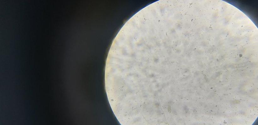 biotechn2_820