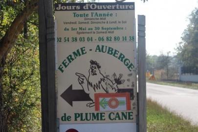 plumecane_820